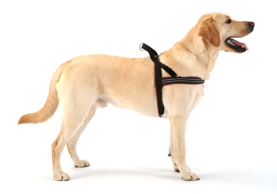 dog_harness_large.jpg